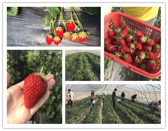 What is the Relationship Between Strawberry and Mining Mill?